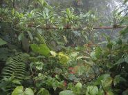 800px-DirkvdM_cloudforest-jungle