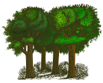 trees-colorized-002